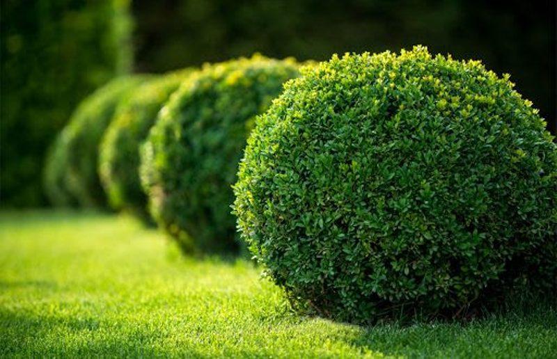 désherber le jardin